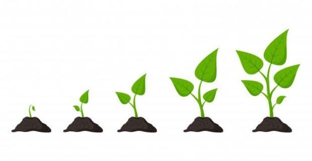 Les étapes pour produire des semences biologiques de qualité