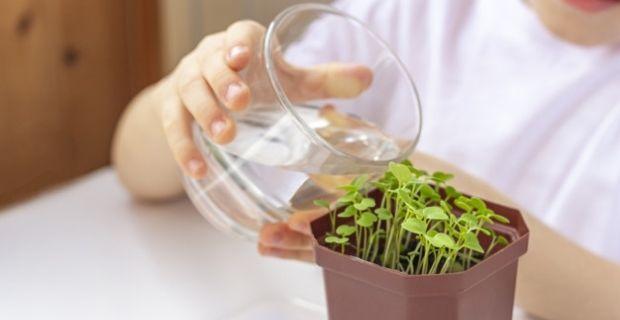 Comment faire ses propres semences paysannes ?